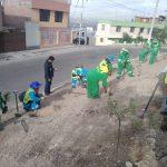 Mancomunidad realizó campaña de  arborización en Alto de la Luna